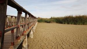 Las Tablas de Daimiel solo mantienen a día de hoy 528 hectáreas inundadas - EFE/Mariano Cieza. (clm24)